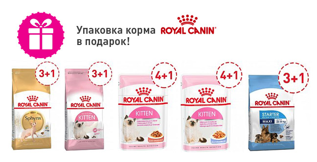 Акция на корма Royal Canin